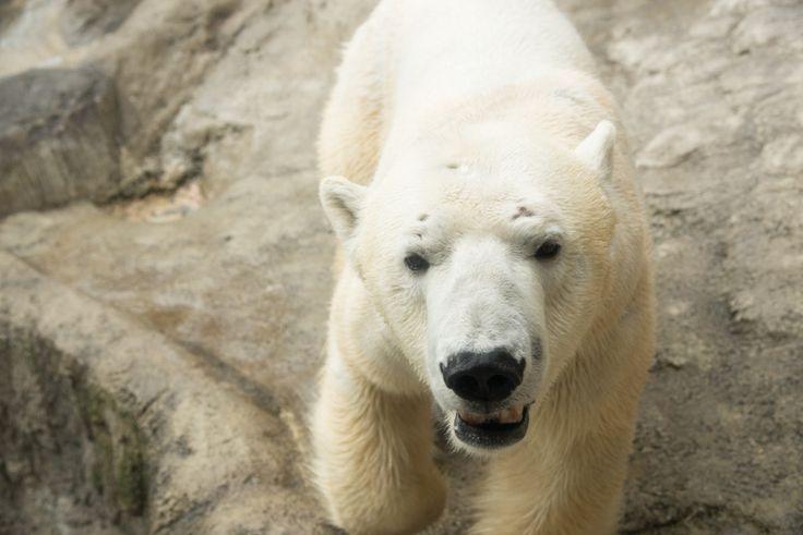 「年間300万人の大ブームは本当に辛かった」旭山動物園の園長がいま語る真実 - Yorimichi AIRDO 旅のよりみちをお手伝い
