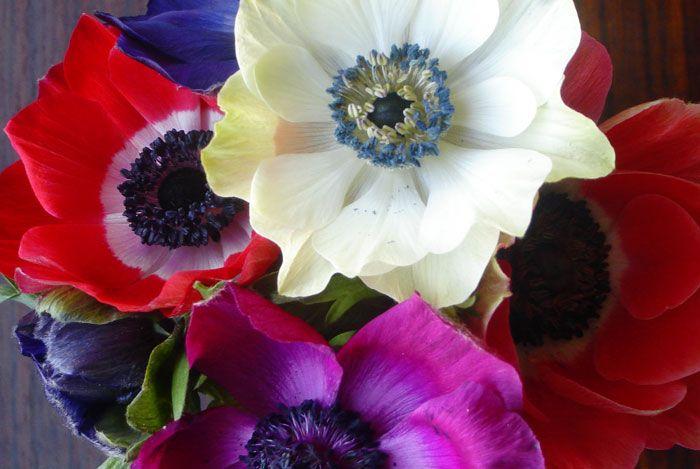 Los bulbos de oto o flores de an monas http www - Bulbos de otono ...