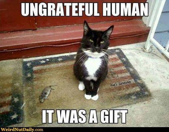 Cats bringing home 'presents'...HELP! — Digital Spy