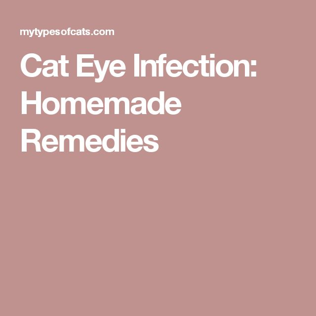 Cat Eye Infection: Homemade Remedies