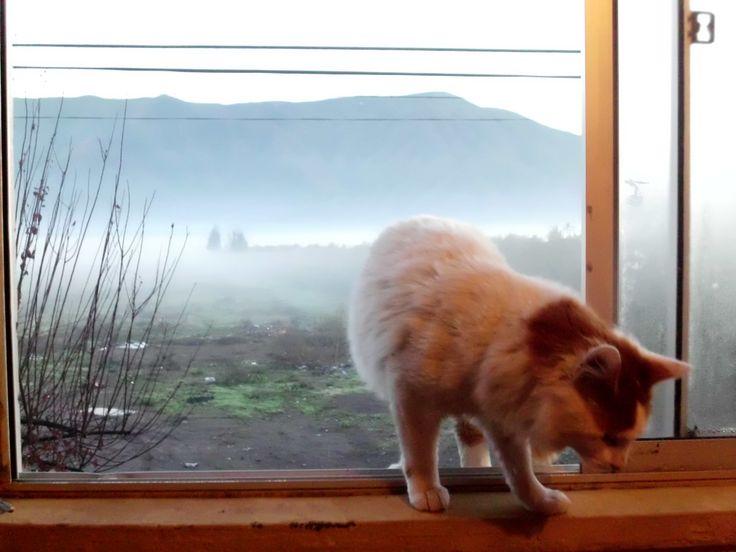 una mañana fría