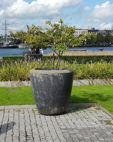 Planten bak, Rotterdam