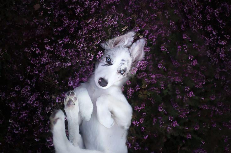 This Polish Photographer Takes The Most Beautiful Dog Photos Ever (13 Pics) | Bored Panda