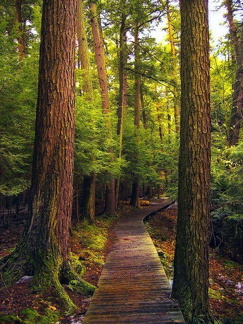Salt Springs State Park, Susquehanna County