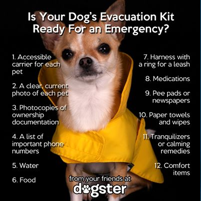 Tips for Evacuating with Dogs: What you need to know in case of an emergency, and what should be in your pet's evacuation kit.