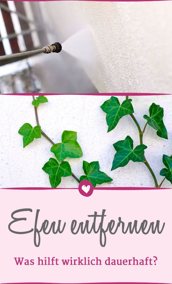 14 besten Garten Bilder auf Pinterest | Blumengarten, Gartenideen ...