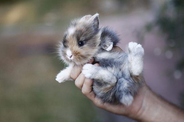 Bunny time: Fluffy Bunnies, Animal Baby, Hands, Animal Photo, Baby Baby, Easter Bunnies, Baby Bunnies, Peter Rabbit, Baby Animal