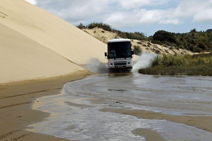 Tour coach in Te Paki Stream by the Te Paki Sand Dunes, Aupouri Peninsula, Far North https://www.amazon.com/s/ref=nb_sb_ss_i_1_12?url=search-alias%3Ddigital-text&field-keywords=neil+rawlins&sprefix=neil+rawlins%2Cundefined%2C596&crid=22MB8728NECRE