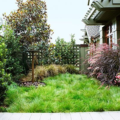 No-mow grasses Some grasses can live on rainfall alone in their native Western ranges, and they need mowing just once or twice a year to kee...