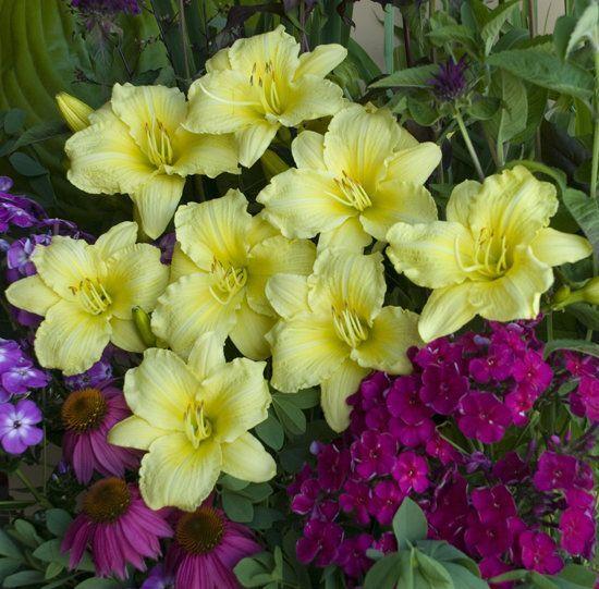Proven Winners Dream Garden Sweepstakes