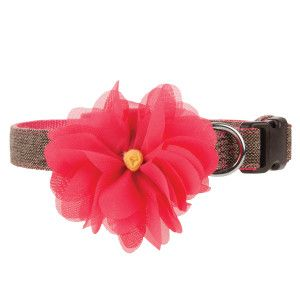 Martha Stewart Dog Collars With Flowers