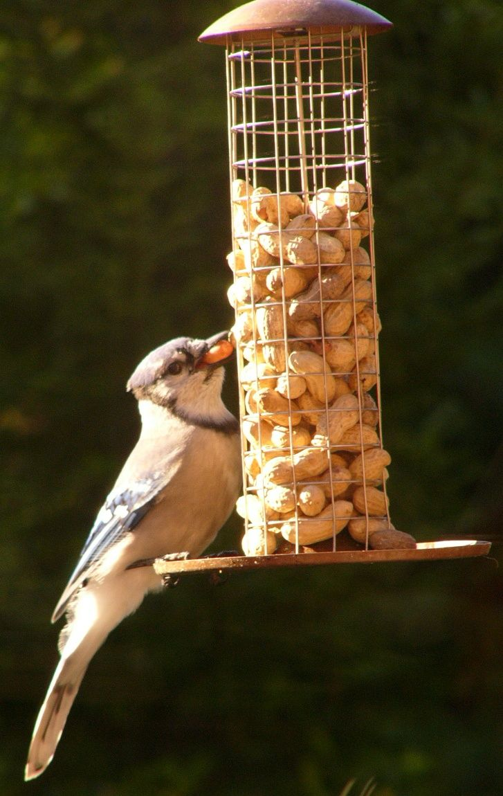 family pin pinterest rspb table country barn peanut plans bird feeder chickadee