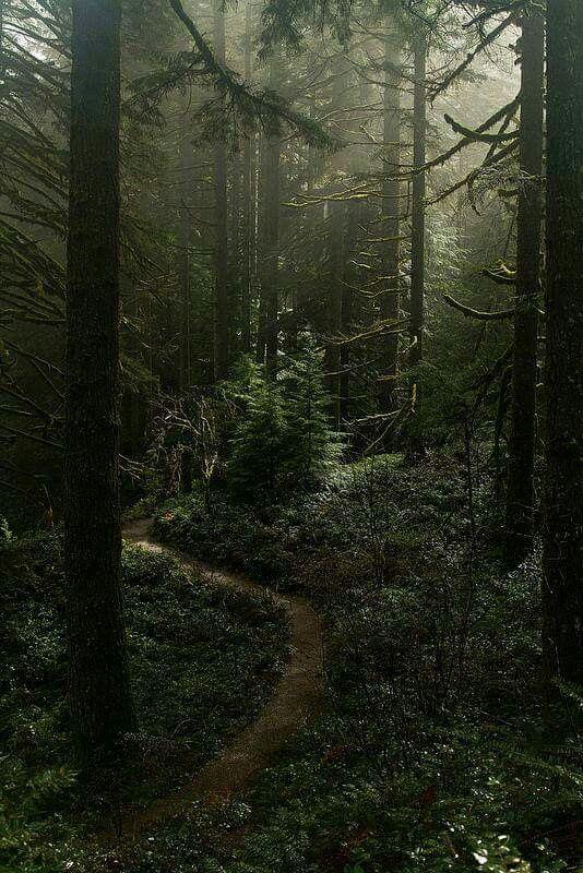 Místico bosque...