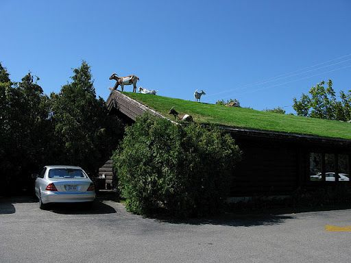 Al Johnson's Swedish restaurant in Sister Bay, Wisconsin, has a roof that goats can graze on! (©All rights reserved by Big Rye): Vacation Spots, Favorite Places, Favorite Vacation, Swedish Restaurant, Green Roof, Awesome Places