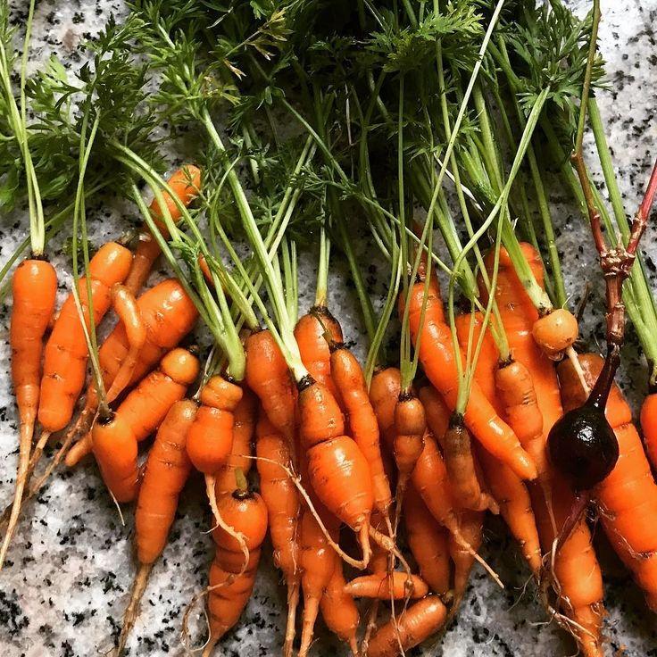 Mi mini producción de pequeñas #zanahorias . De mi pequeña terraza la tierra te da sorpresas!! Ahora falta las !!      #veggies #vegetables #vegetarian #homegrown #greens #veganfoodshare #veggie #plantbased #salad #veganfood #vegansofig #whatveganseat #fruits #avocado #organic #dairyfree #eatyourveggies #wholefoods #kale #veg #spinach #growyourown #carrot #huertourbano