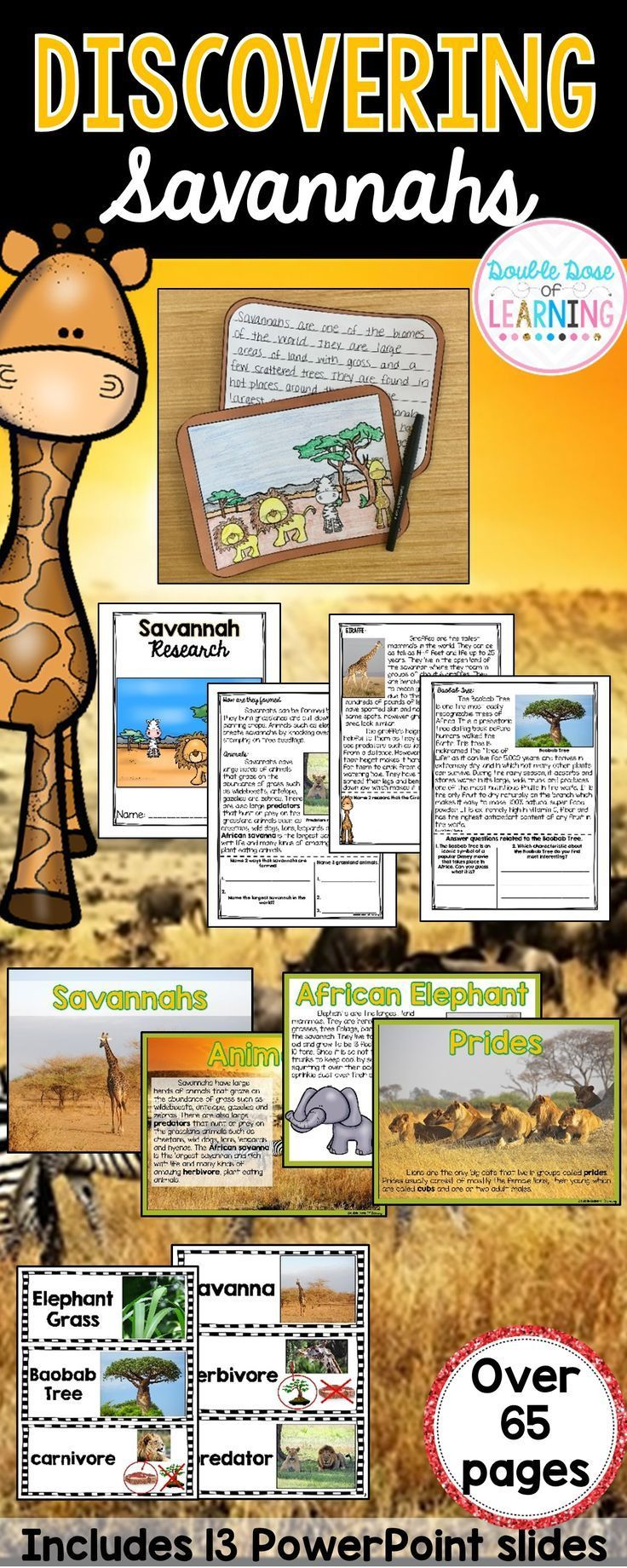 Easily and thoroughly teach the Biomes with this Savannah Research Unit with ready to go materials and PowerPoint! This unit is interactive and utilizes multimodal strategies to increase student engagement and outcomes. The Savanna unit is a comprehensive week long unit that integrates technology, vocabulary, writing, art, reading strategies and more! Students will respond to informational text by answering questions in a student booklet in a variety of formats. Students will learn…