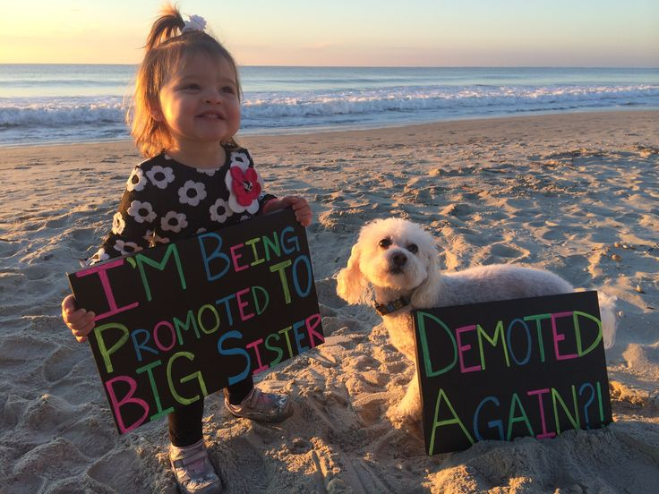 Our daughter is excited to be PROMOTED to big sister but our dog is not too happy about being DEMOTED again.