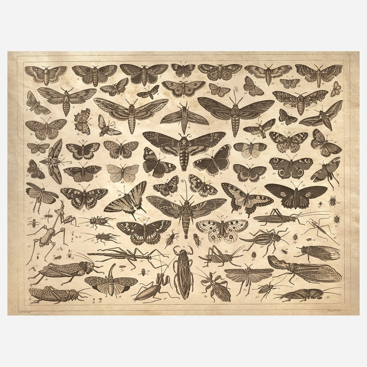 (33) Fab.com | Winged Insects Print