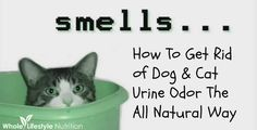 Accidents Happen! Learn How To Get Rid of Dog and Cat Urine Odor The All Natural Way | WholeLifestyleNutrition.com #holistic