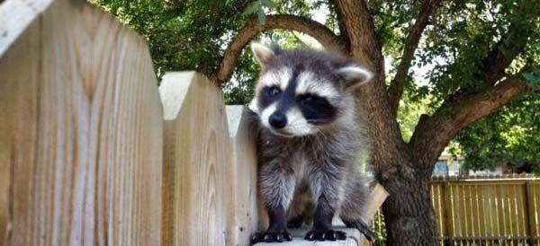 Poze cu animale haioase in seria de luni