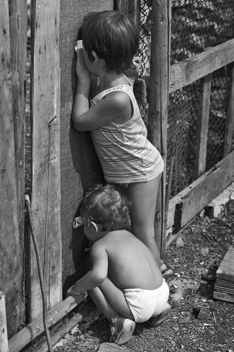 Hey, what's out there? Much more interesting on the other side of the fence!