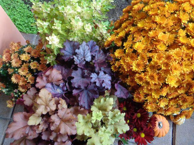II colori dell'autunno in giardino https://lefotodiluisella.blogspot.it/2017/10/ingresso-dautunno.html