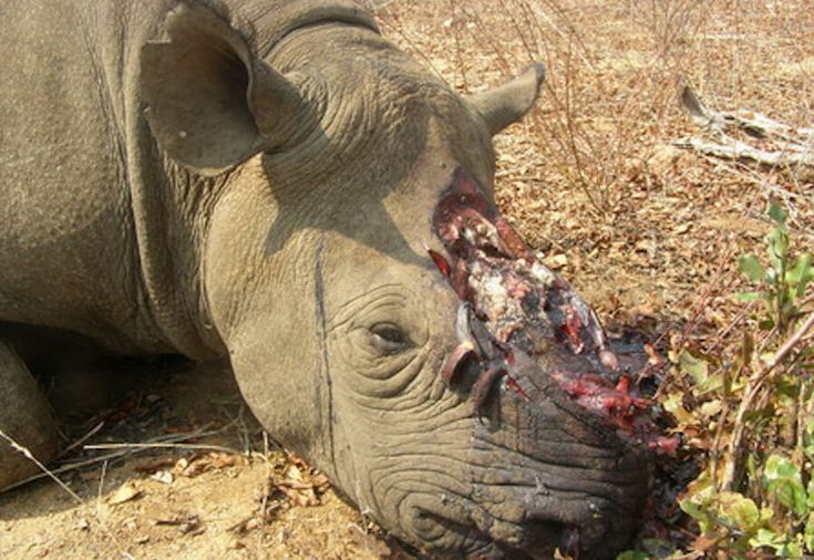 Sign: Stop Brutal Rhino Poaching Before The Species Goes Extinct