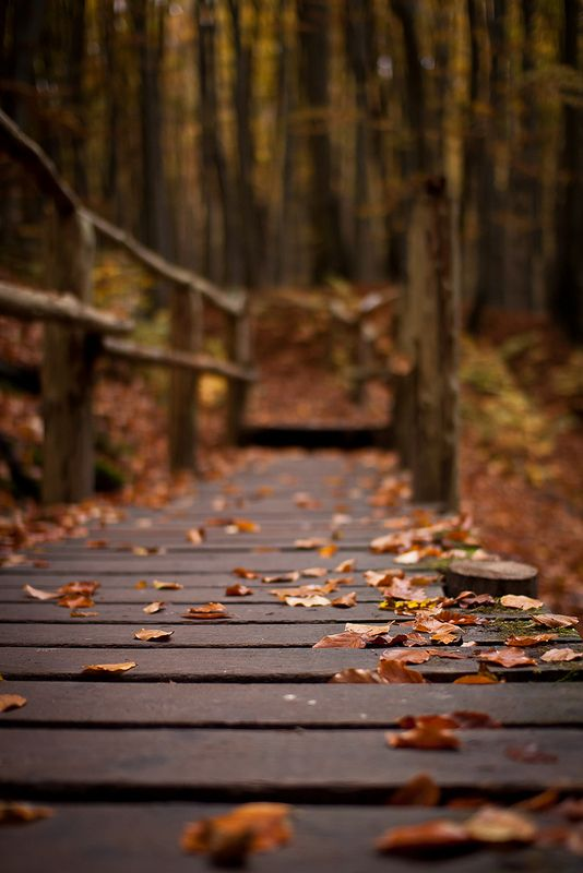 autumn leaves on the path   nature photography