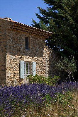 France, Alpes-de-Haute-Provence, traditional rock house, lavender flowers, 42-34053066, Fotochannels