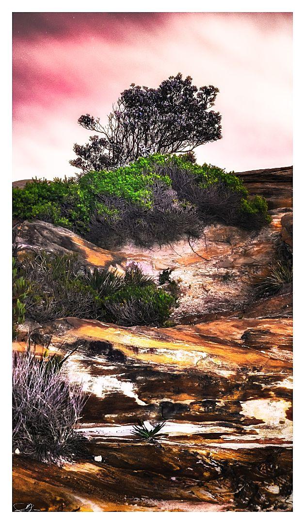 Cliffside Vegetation II by mdomaradzki.deviantart.com on @deviantART