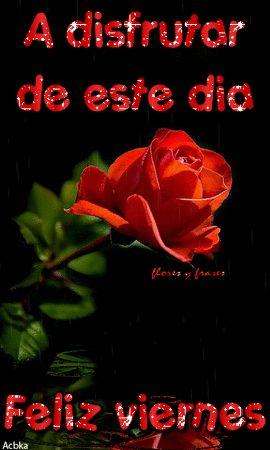 Flores Y Frases Feliz Viernes Flores Y Frases Rose Blessed