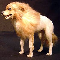 17 Best images about Pets on Pinterest | Chihuahuas ...White Pomeranian Lion Cut