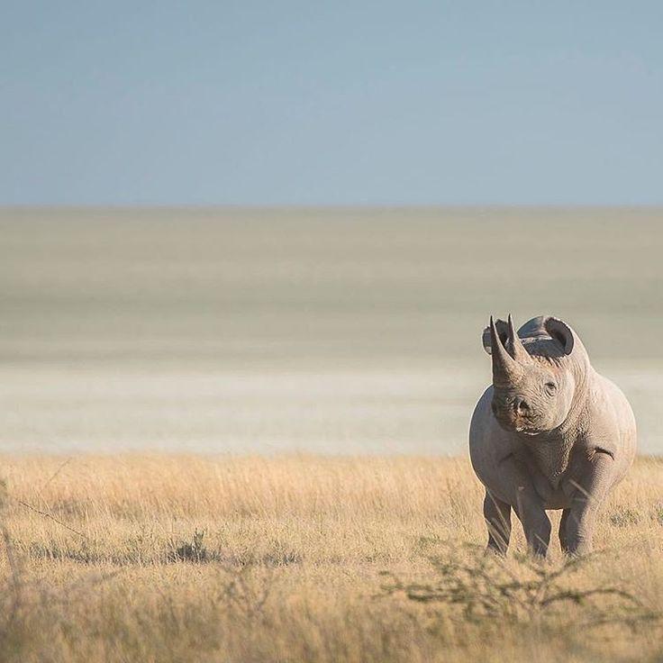 Refúgio - geographicwild: . Photo by @wild.anjadenker Sole...