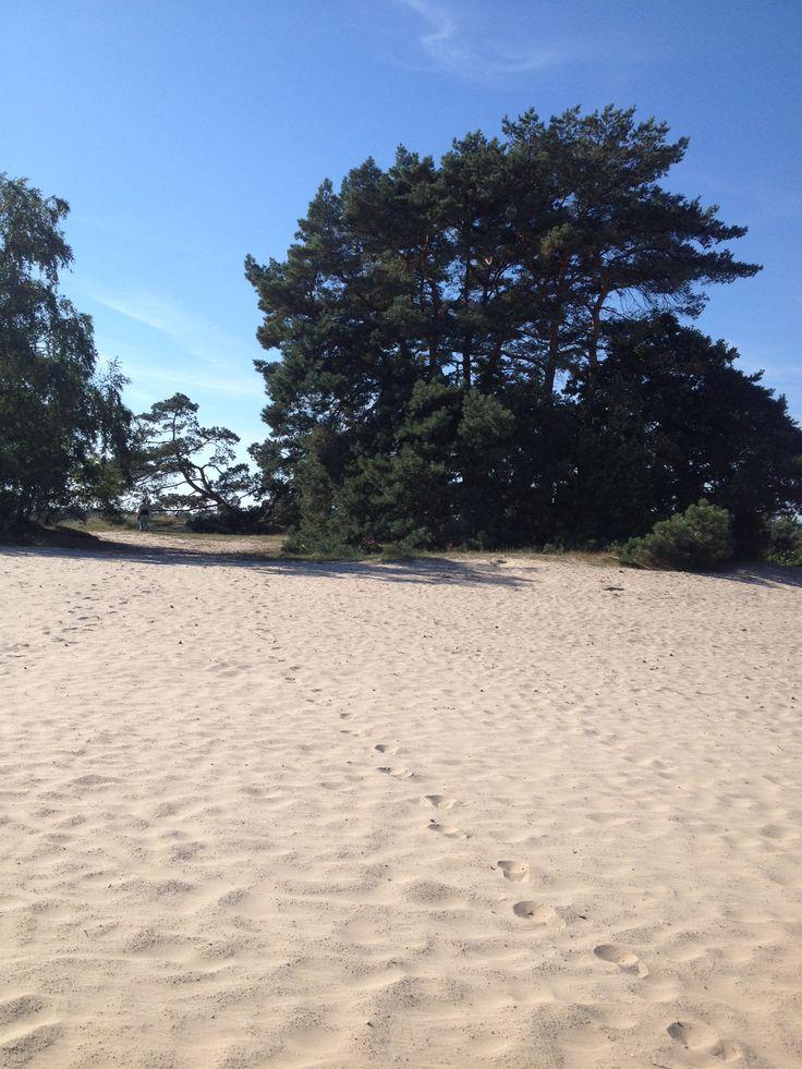 Sandy woods