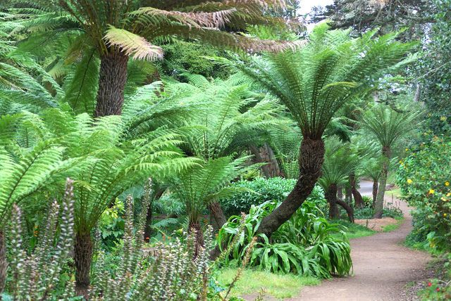 You already have ferns. If they were more randomly planted with tree ferns between them?