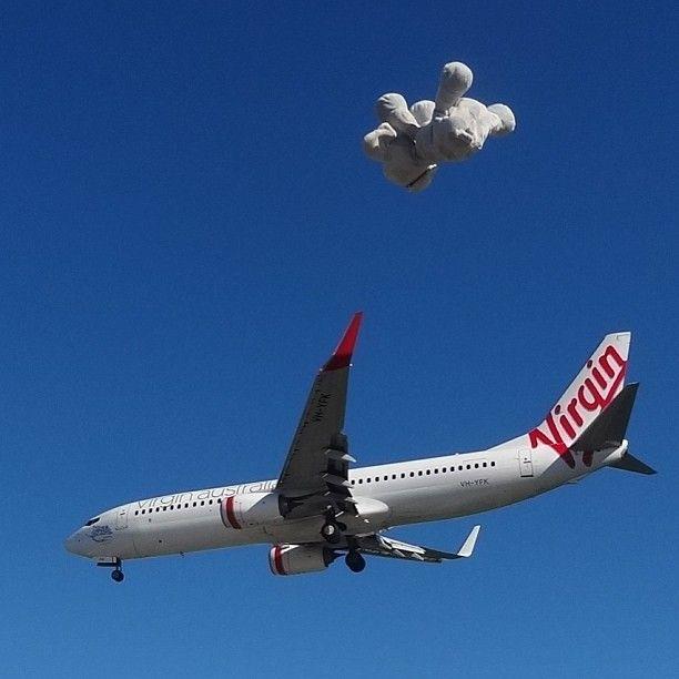 #hephalump #flying high www.teddybearlife.com #elephant #teddy #travel #bear #teddies #teddybear #plane #virginairlines #aeroplane #airplane #socute #softtoy #sydney