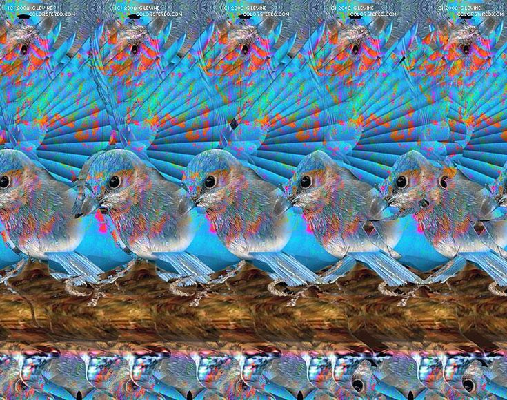 Cool Stereograms | Blue Bird