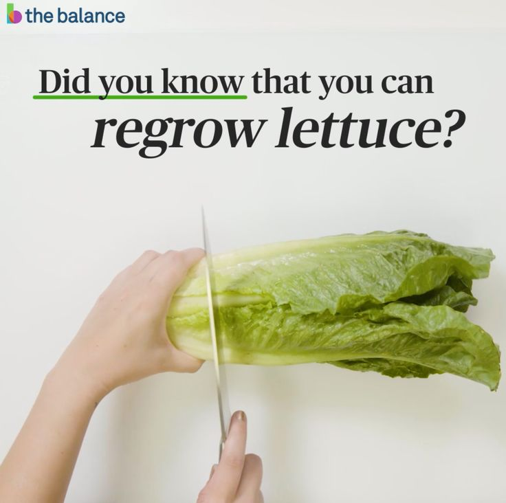 Buy 1 head of lettuce and get 2 when you regrow your lettuce. It's easy and it could save you $300 a year. Bonus: more greens are good for you!