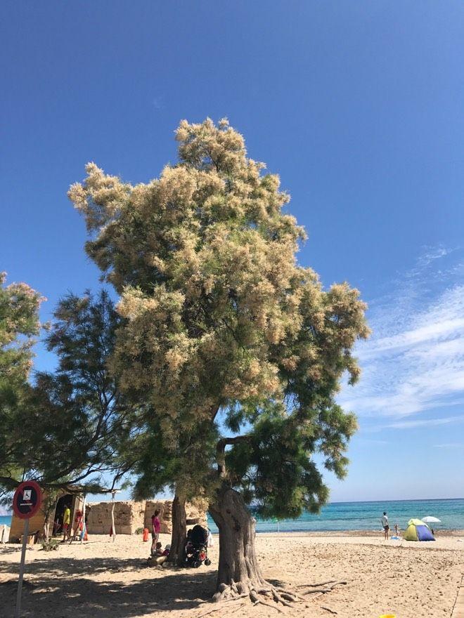 Heute verrate ich Euch einen meiner Geheimtipps in Sachen Strände auf Mallorca: Son Serra de Marina und die dortige Strandbar EL SOL!