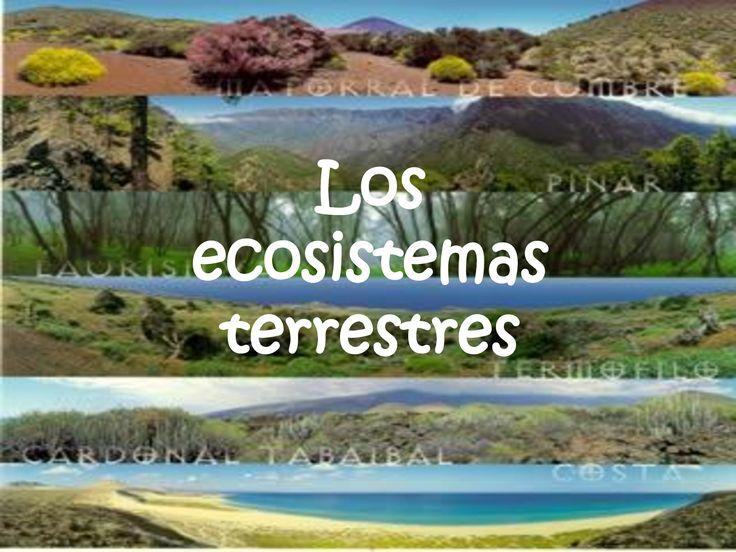 38 best ecosistemas de puerto rico images on pinterest knowledge ecologia fandeluxe Choice Image