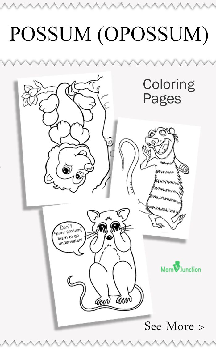 Top 10 Possum Opossum Coloring