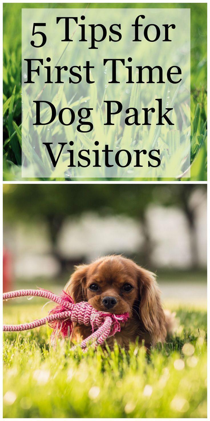 5 Tips for First Time Dog Park Visitors Dog park, Pet