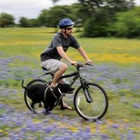 """Dog Bike Accessories by """"The Dog Outdoors""""."""