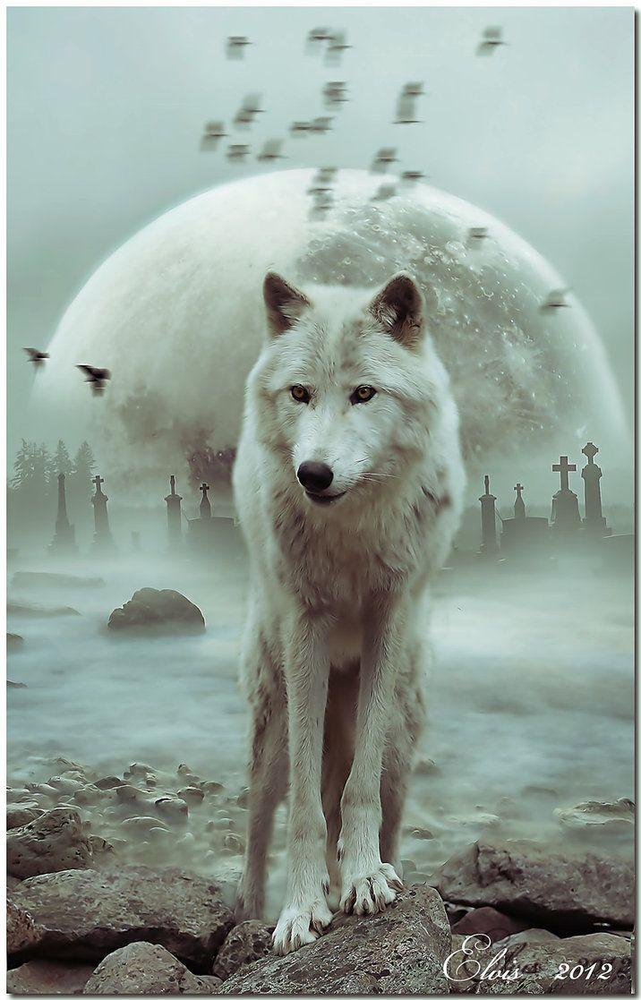 Les 903 meilleures images du tableau wolf spirit sur for Utilisation du white spirit