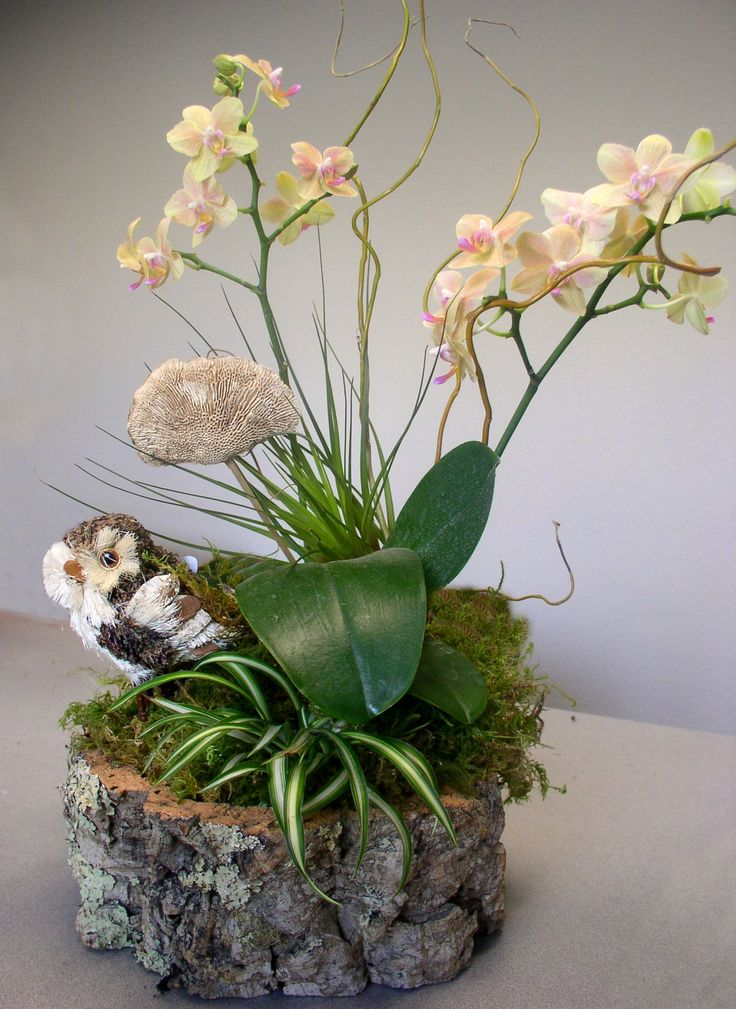 496 best images about potted orchids on pinterest - How to care for potted orchids ...