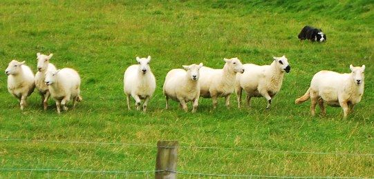 New Zealand Travel Tips – How To Speak Like a Kiwi Bro!