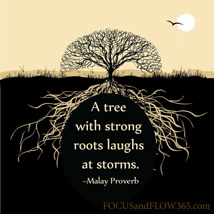 a tree with strong roots laughs at storms - Google Search
