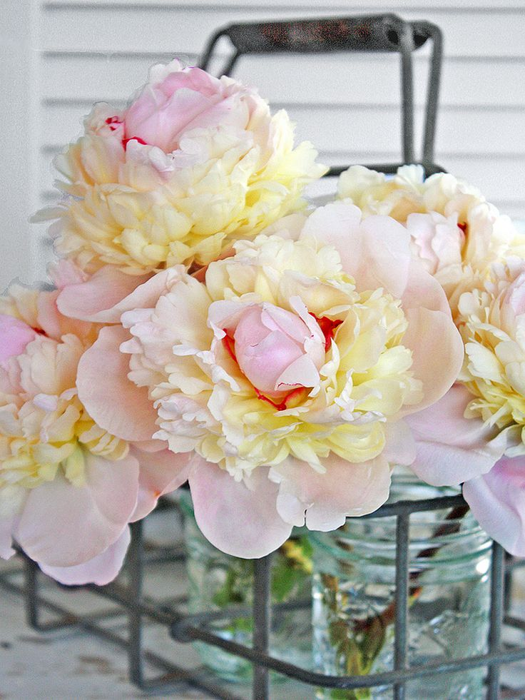 Gorgeous Peonies by Balliwicks: Favorite Flowers, Gorgeous Peonies, Flowers Arrangements, Milk Crates, Beautiful Flowers, Floral Arrangements, Mason Jars, Beautiful Peonies, Pink Peonies