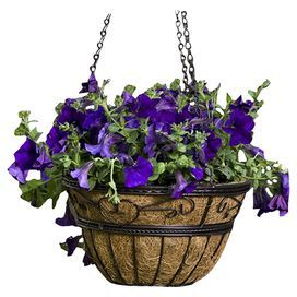 Ok so which plants have you found to survive well in a shaded hanging basket?