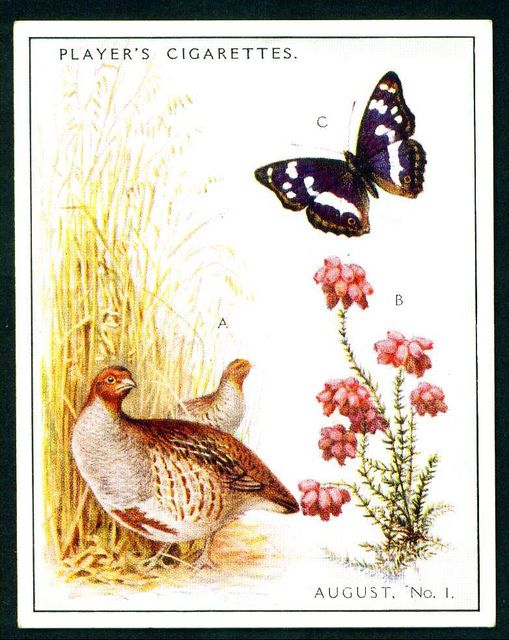 "Player's Cigarettes  ""A Nature Calendar"" (series of 24 large cards issued in 1930) #15 August (1)"